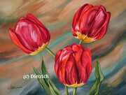Rouge Rubis / Ruby Red - tulipe